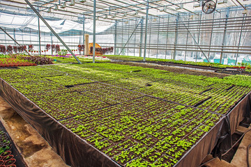 Modern hydroponic greenhouse or glasshouse interior inside, industrial agriculture