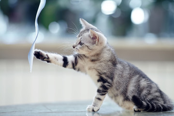 The striped  kitten plays with a tape.
