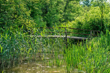 Typical landscape at swamp area of Imperial Pond (Carska bara), large natural habitat for birds and other animals from Serbia. Wooden bridge in the photo.