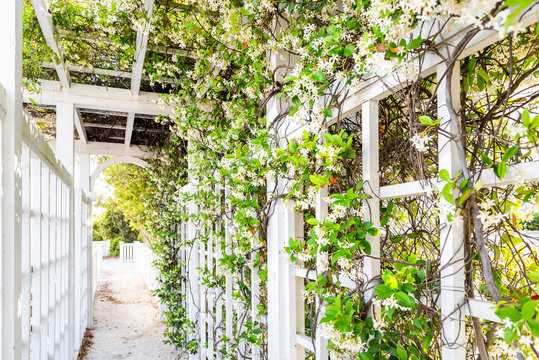 Closeup of patio outdoor spring flower garden in backyard porch of home, romantic white wood with pergola wooden arch path, climbing covering vine plants