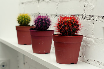multicolored cactus on white brick wall background