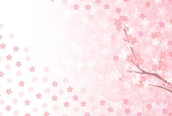 桜 花 年賀状 背景