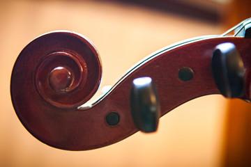 Fiddle Head