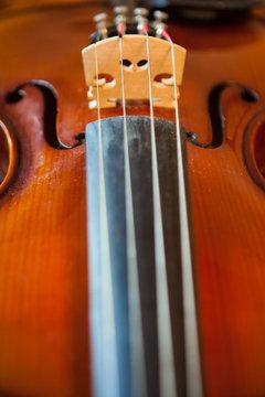 Violin Bridge