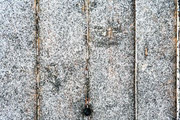 First Snow On Wood