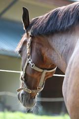 Head of a healthy sport horseduring dressage at rural equestrian center