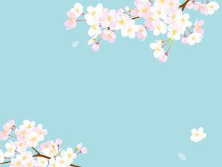 桜 背景イラスト