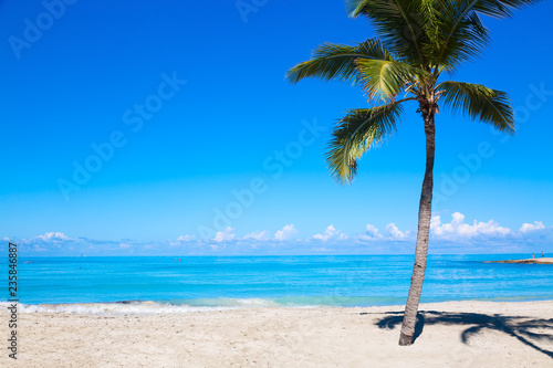 Vacation Holidays Background Wallpaper Palm And Tropical Beach In