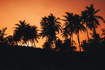 silhouettes of palm trees against the orange sky at sunrise