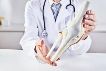 Male doctor holding model anatomy of knee bone