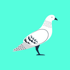 Pigeon Dove Bird Stand Vector and Icon