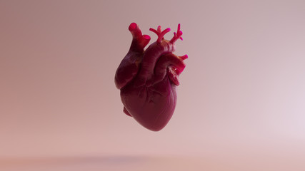 Pink Anatomical Heart 3d illustration 3d render
