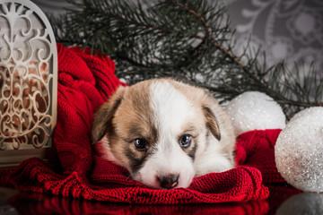 Fluffy christmas cardigan puppy