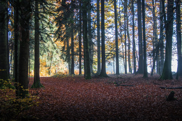 Moody autumn forest with rays of light in the Black Forest, Germany