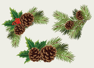 Vector collection branches of Christmas tree with pine cone