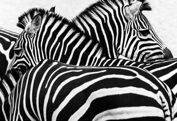 In de dag Zebra Zebra strips with patterns