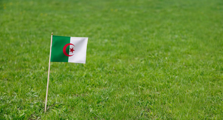 Algeria flag. Photo of Algerian flag on a green grass lawn background. Close up of national flag waving outdoors.