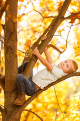 Photo of boy sitting on tree in autumn park