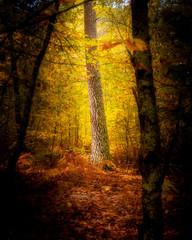 Illuminated tree in mystic forest