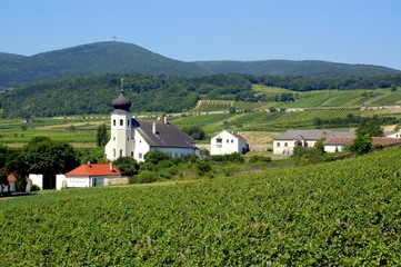 Village of Thallern in Summer, Austria, Rural Settlement, Vineyards