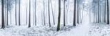 In den Tiefen des allgegenwärtigen Winters