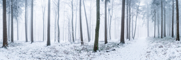 Wald Panorama im Winter