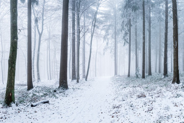 Verschneiter Wald im Winter