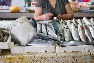 Various sea fish on counters in the market.