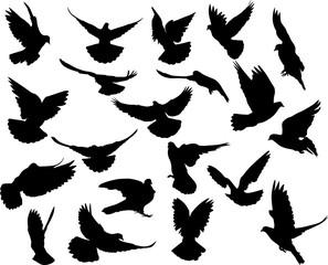 twenty isolated black doves