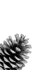 Black and white pine cone photography