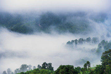 Beautiful morning panorama of forest covered by low clouds. Colored sunrise in forested mountain slope.