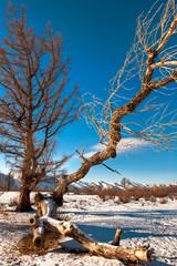 Mongolische Winterlandschaft