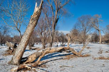 Vereiste Winterlandschaft in der Mongolei