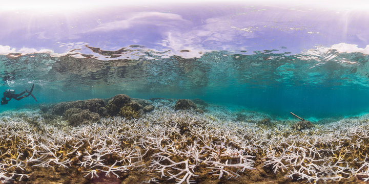 360 of bleached Staghorn coral