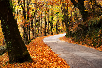 winding road in autumn with oak trees in Geres , Portugal