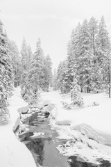 High-key winter landscape with fir trees and a stream in the foothills of Switzerland