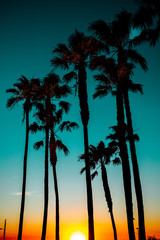 Sunset shining on palm trees