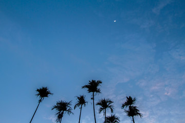 Palm trees on the beautiful blue sky background