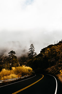 Empty road surrounded fog and trees in autumn
