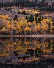 Colorful trees being reflected on the water during autumn
