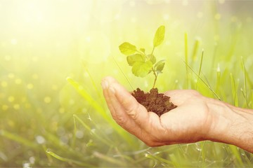 Green Growing Plant in Human Hand on beautiful natural