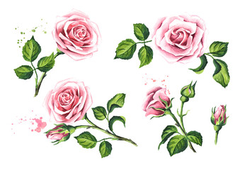 Pink rose flower set. Design elements for cards, invitations and textile. Watercolor hand drawn illustration,  isolated on white background