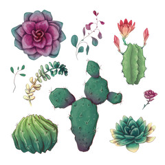Hand drawn colorful cactuses and succulent set. Houseplant, cactus, tropical plants.