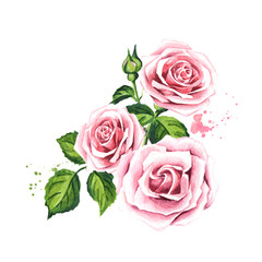 Rose composition. Watercolor hand drawn illustration,  isolated on white background