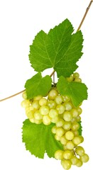 White Grape Cluster With Leaves - Isolated