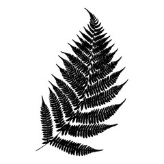 Vector fern silhouette . Black isolated print of fern leaf on the white background.