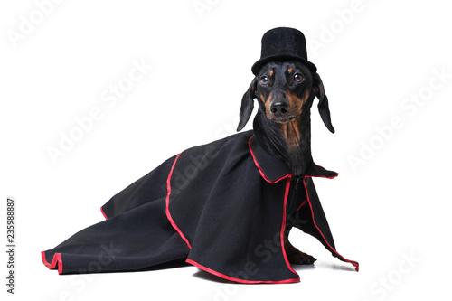0de7b43305 Dachshund dog