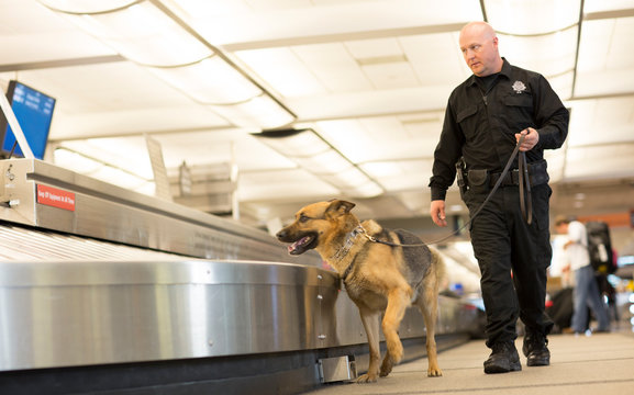K9 Police Dog sniffs airport luggage
