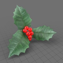 Holly berry leaves and fruits 2