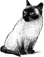 Sketch of a sitting siamese cat